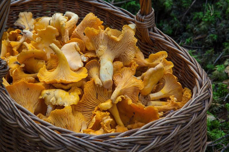 Darf man Pilze aufwärmen und einfrieren?