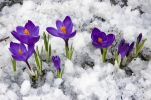 Den Garten winterfest machen – diese Arbeiten stehen jetzt an