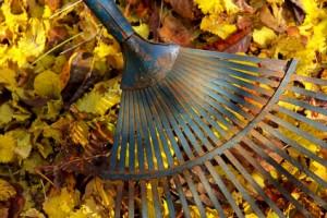 Herbstlaub im Garten – Was tun mit den Herbstblättern?