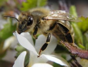 Schutz vor Wespenstichen: Diese Maßnahmen helfen