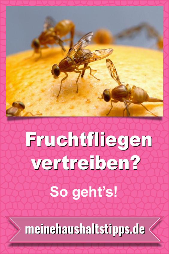 Fruchtfliegen vertreiben – Hausmittel gegen die kleinen Plagegeister
