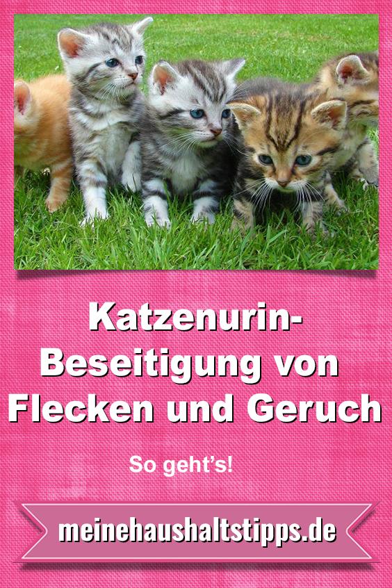 Katzenurin – Beseitigung von Fleck und Geruch