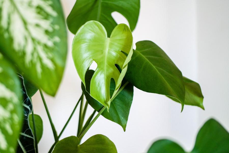 Mit diesen Zimmerpflanzen hat jeder einen grünen Daumen